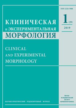 Клиническая и экспериментальная морфология. № 1 (29) / 2019